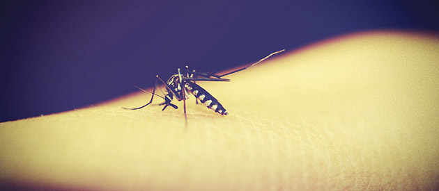 You have malaria, now what?