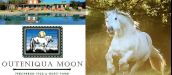 OUTENIQUA MOON PERCHERON STUD & GUEST FARM